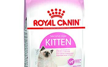 Photo of 30 Meilleur test Royal Canin Kitten en 2021: après avoir recherché des options