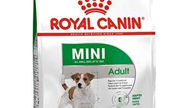 Photo of 30 Meilleur test Royal Canin Chien en 2021: après avoir recherché des options